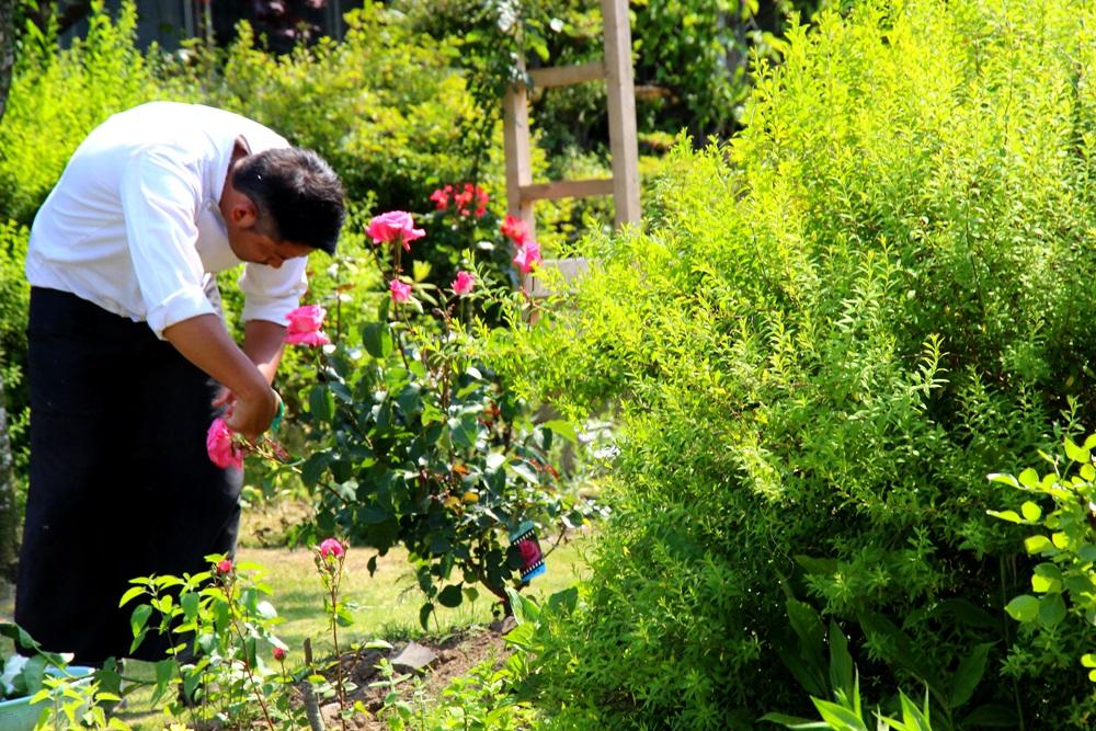 茶蔵の裏庭