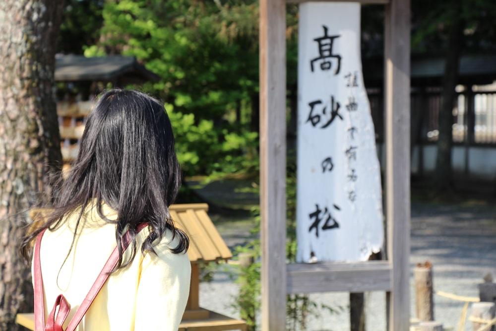 阿蘇神社 高砂の松